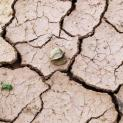 Cho tôi xin chút nước (Ga 4,7) - từ thao thức về Đồng Bằng Sông Cửu Long