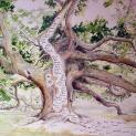 Chùm rễ cây