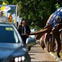 Sri Lanka nồng nhiệt đón tiếp ĐTC với 40 con voi